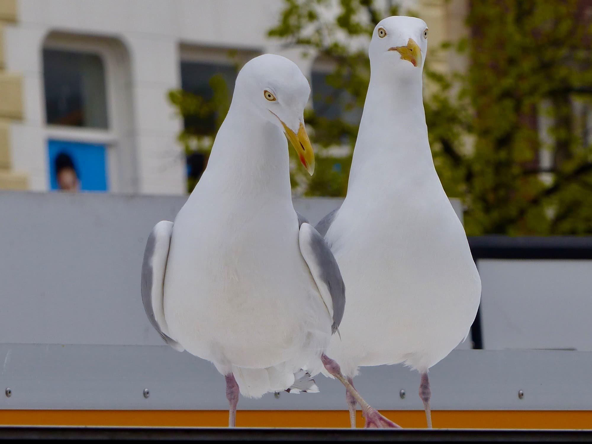 Joke vogels 06  P1090338.jpg