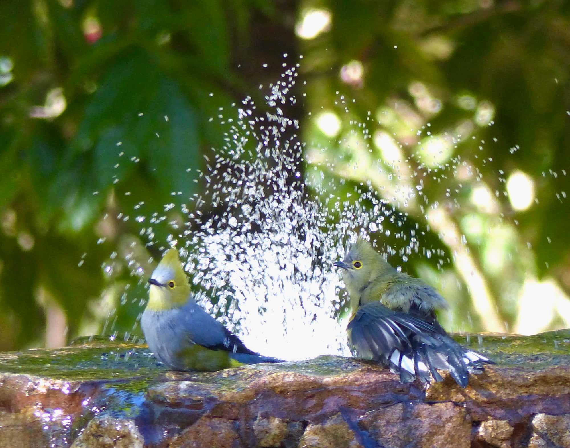 Joke vogels 07 P1070386.jpg