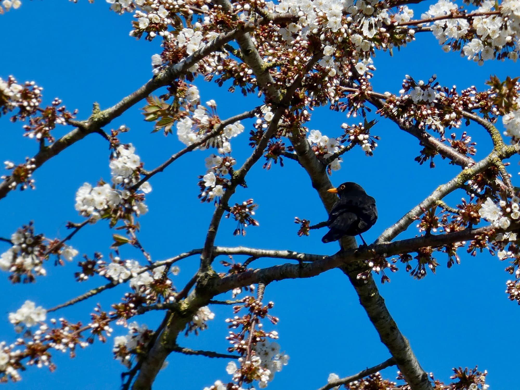 Joke vogels 13 P1070180.jpg