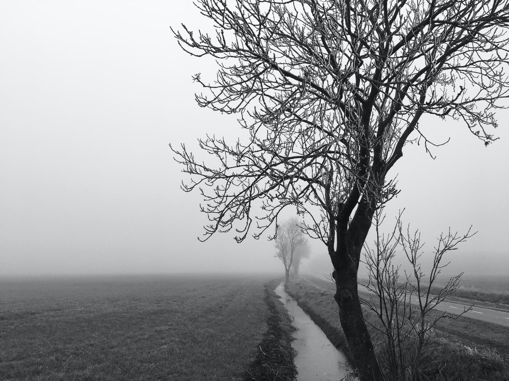 TE-2020-TREES-IMG_1261-pichi.jpg