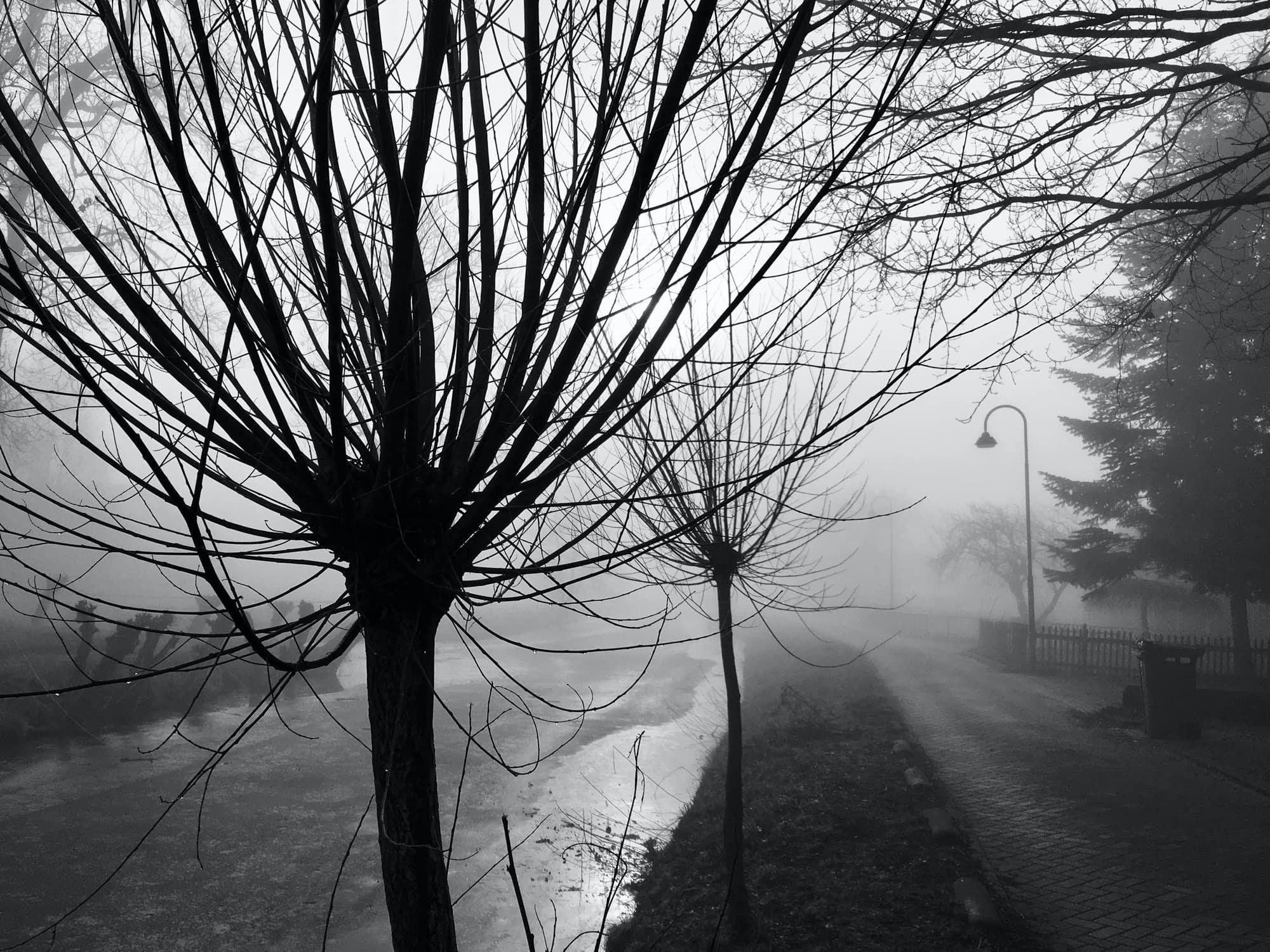 TE-2020-TREES-IMG_2241-pichi.jpg