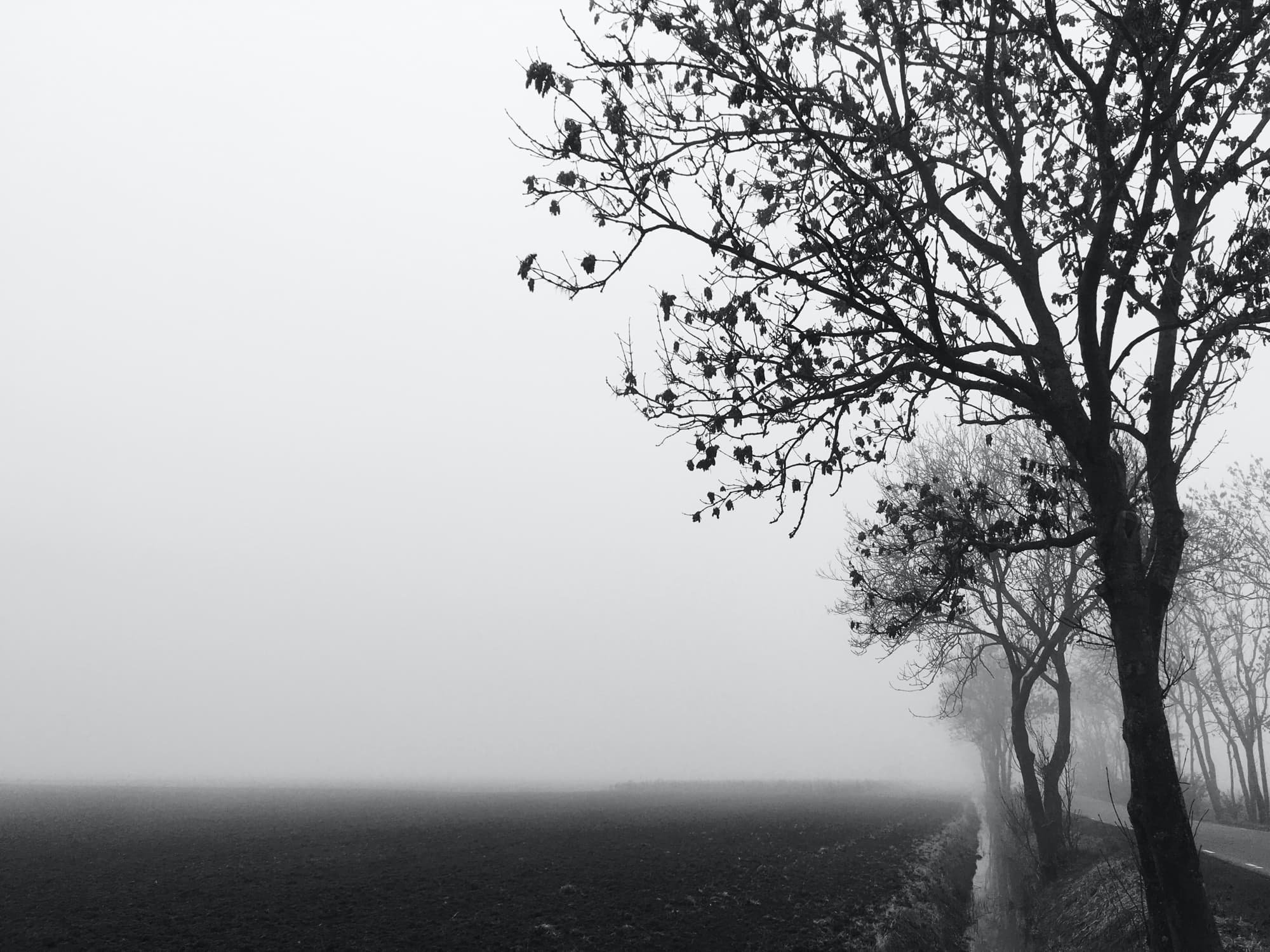 TE-2020-TREES-IMG_4161-pichi.jpg