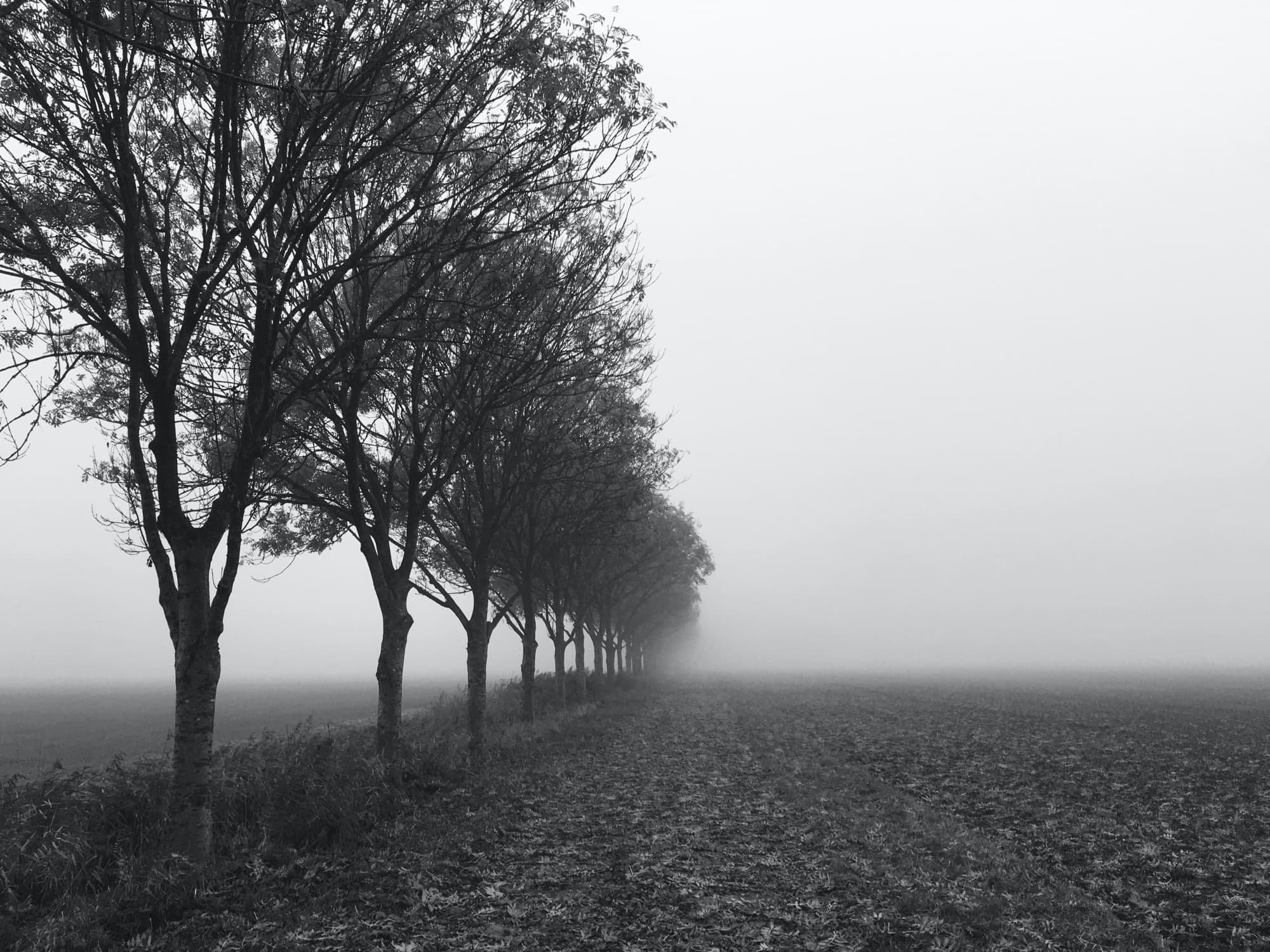 TE-2020-TREES-IMG_4272-pichi.jpg
