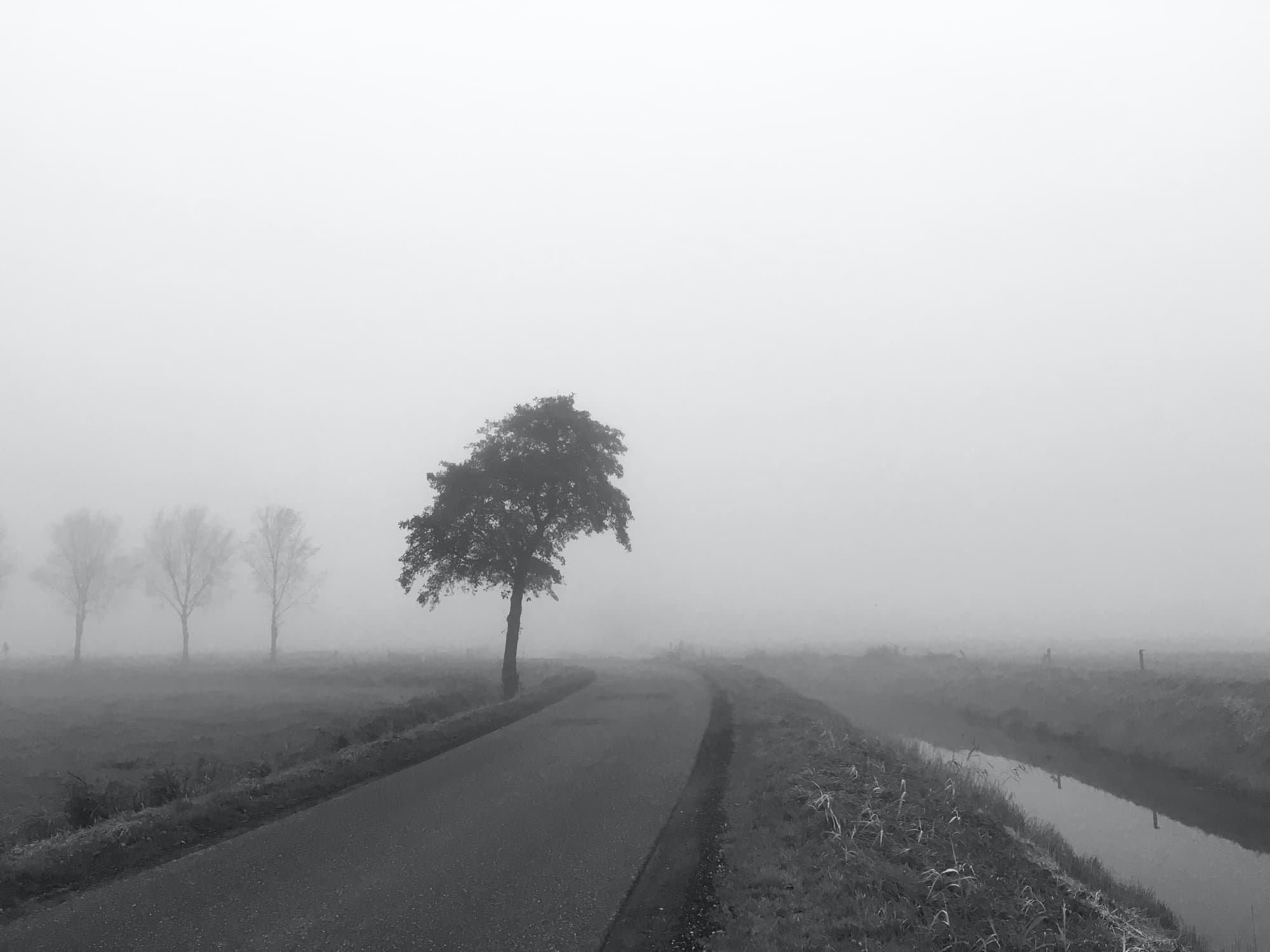 TE-2020-TREES-IMG_4328.jpg