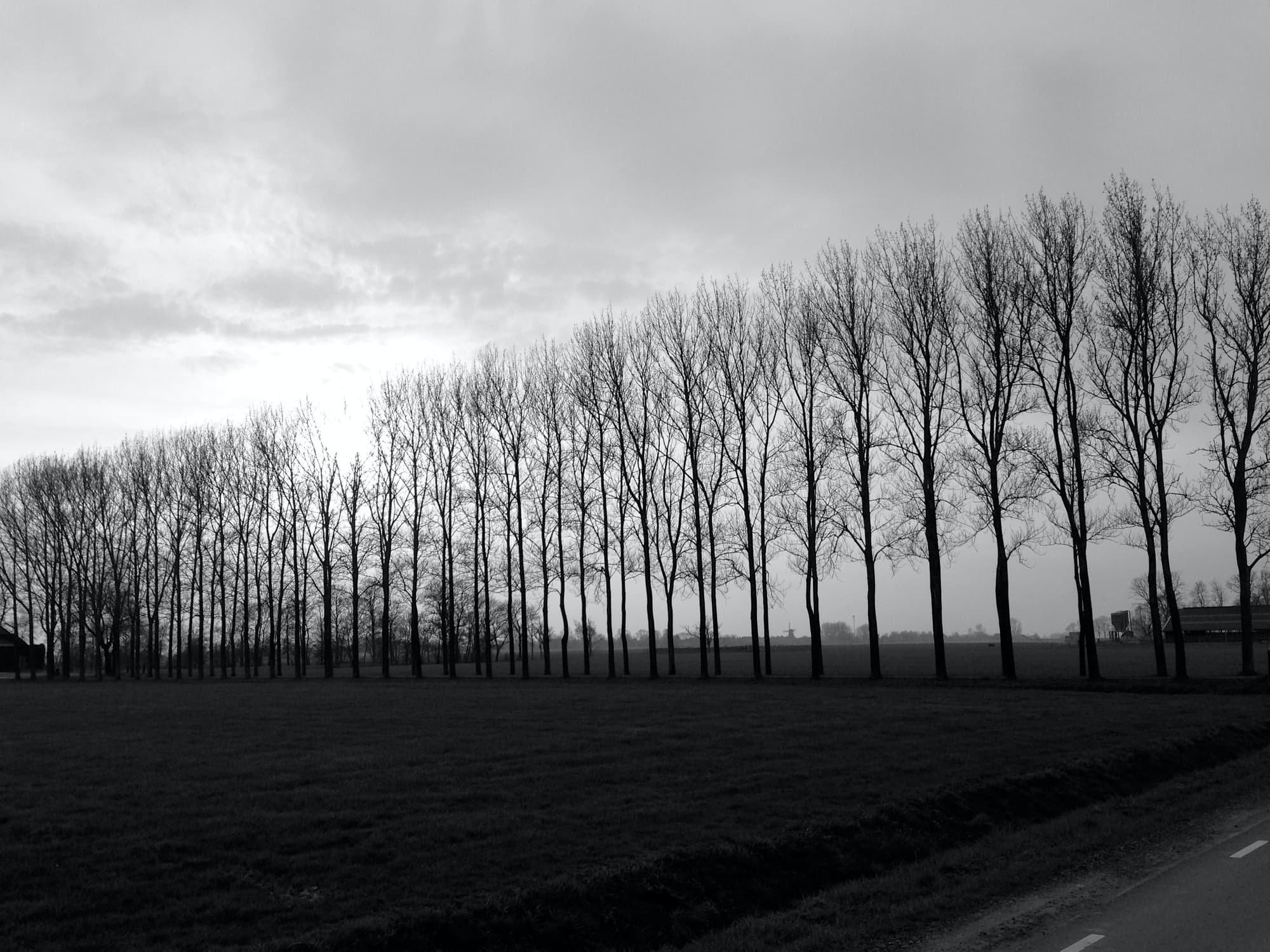 TE-2020-TREES-IMG_5329.jpg
