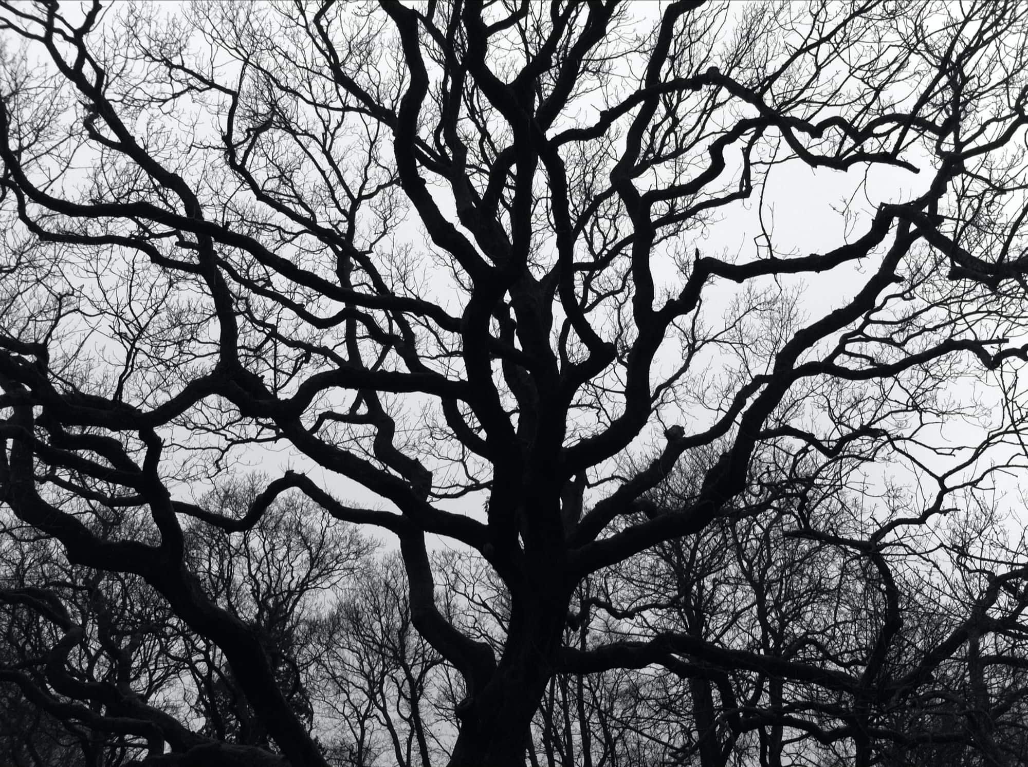 TE-2020-TREES-IMG_5929-pichi.jpg