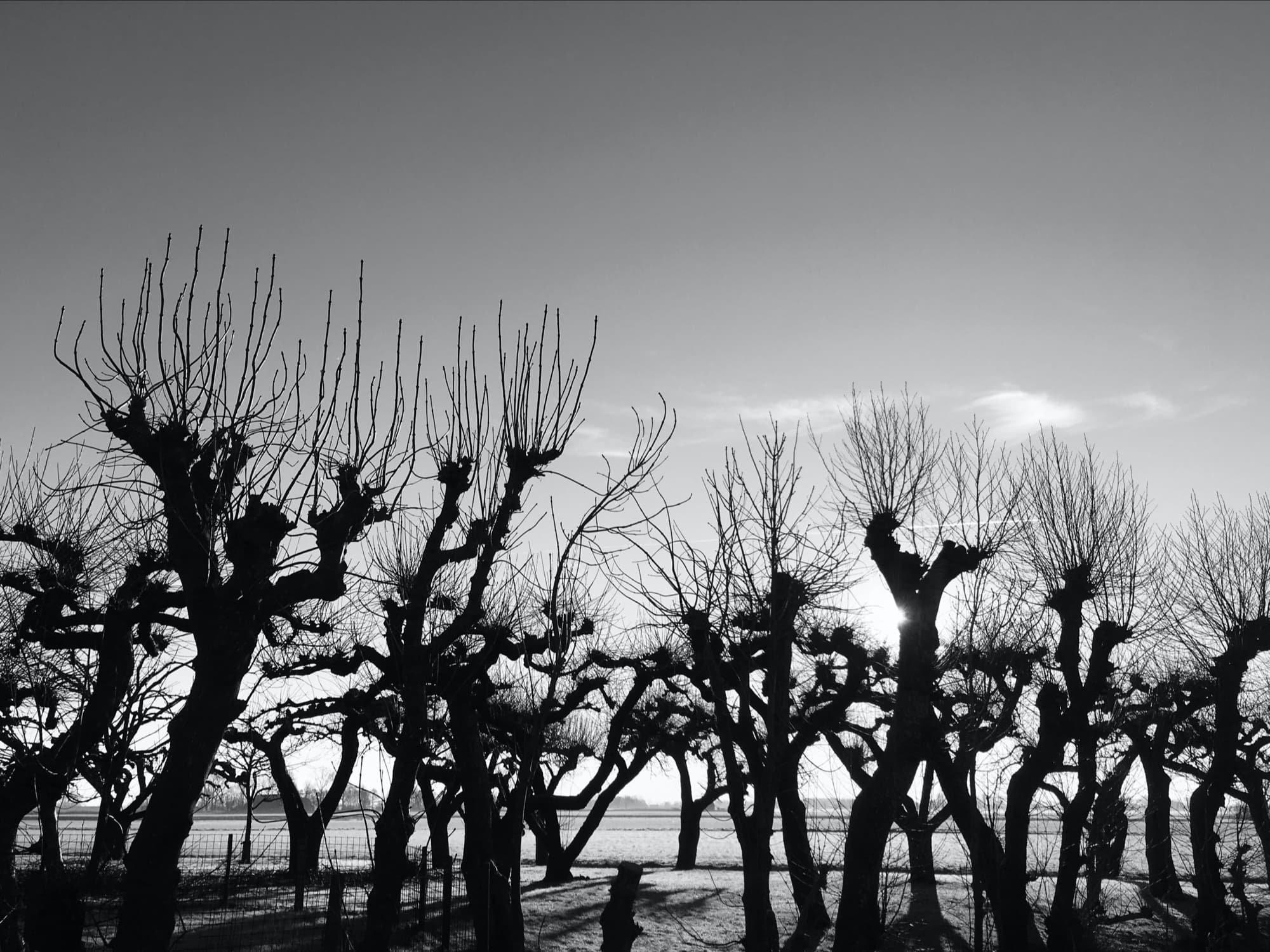 TE-2020-TREES-IMG_7898-pichi.jpg
