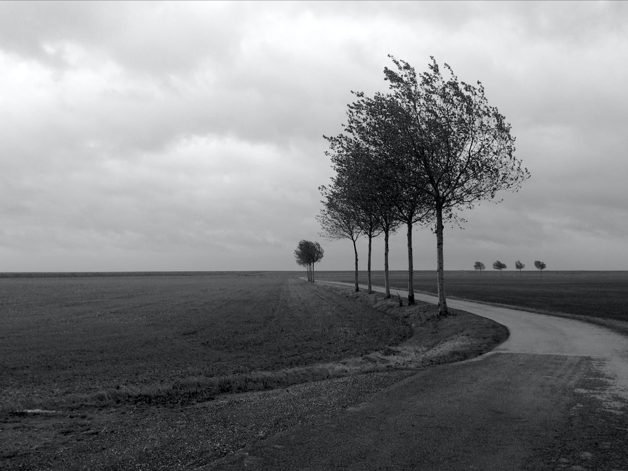 TE-2020-TREES-IMG_8782-pichi.jpg