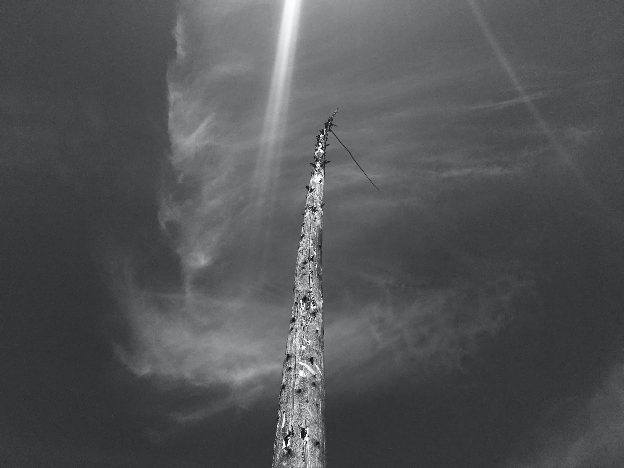 TE-2020-TREES-IMG_XXXX.jpg
