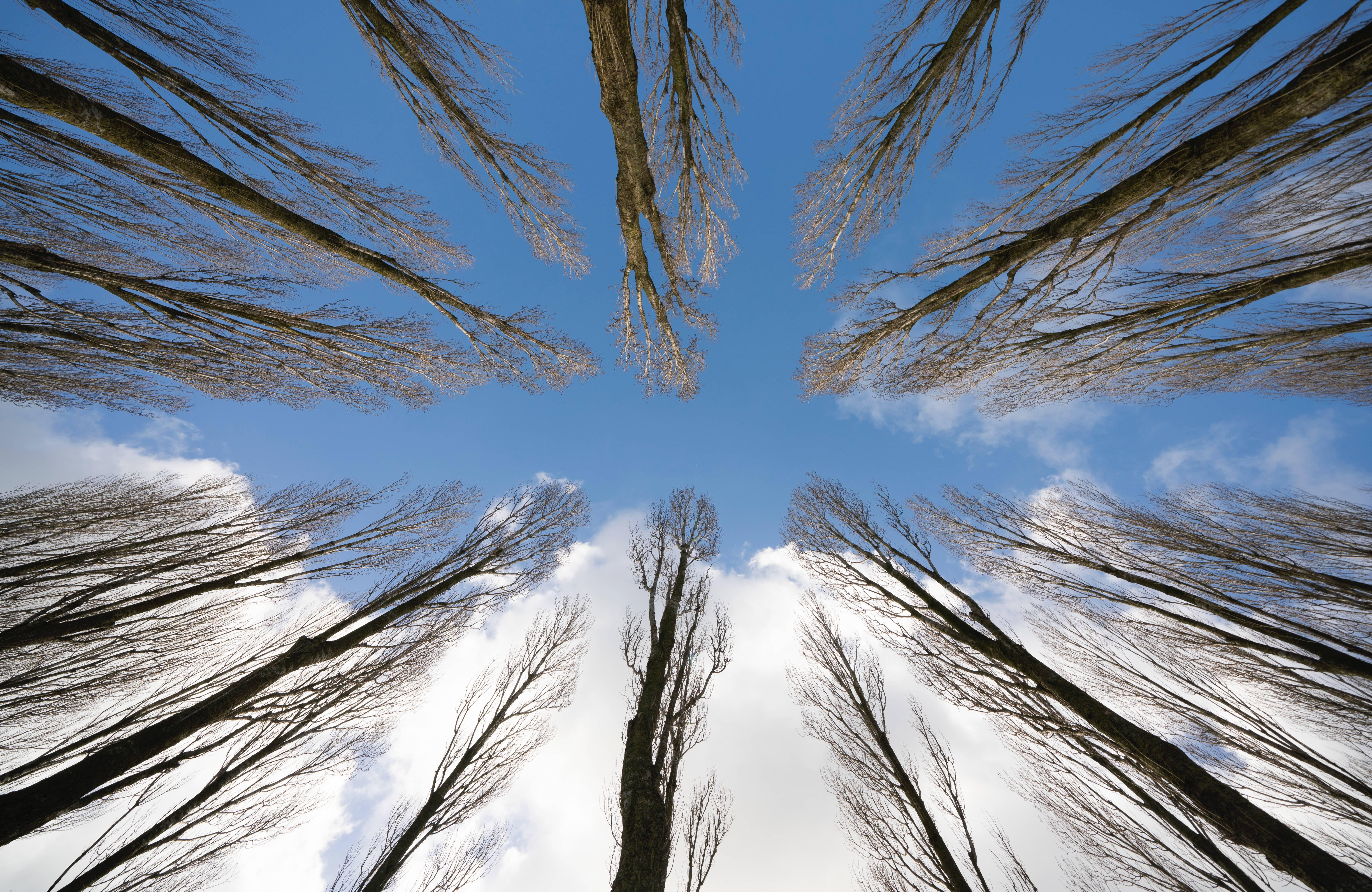wim_bomenrij-leeuwenborgbewerkt-bewolkt-enz-pichi.jpg
